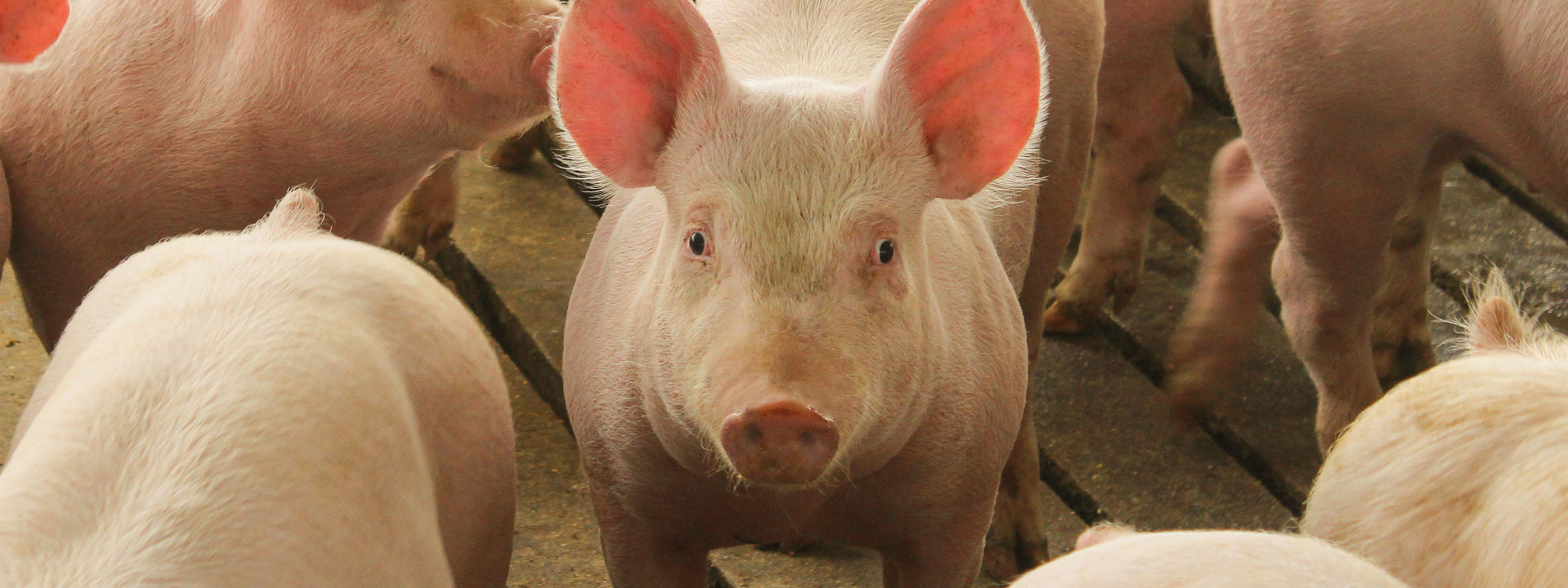 Animal Feed Supplements in Canton, South Dakota